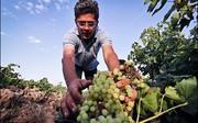 «صادرات» پاشنه آشیل شاهرود/شرق سمنان روی باند توسعه معطل مانده است