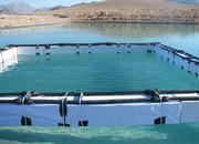 لرستان قطب تولید آبزیان/ بخش خصوصی تقویت می شود