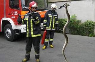 مارگیری آتش نشانی