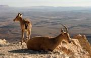ورود بدون مجوز به مناطق حفاظت شده لرستان ممنوع شد