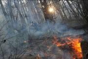 آتش سوزی در جنگل های ایلام/۳ هکتار جنگل در آتش سوخت