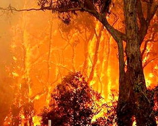 آتش سوزی/جنگل های زیر بام ملایر