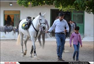 باشگاه سوارکاری ارشاد مشهد
