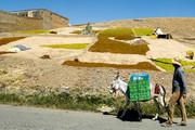 طرحهای ضربتی تولید و اشتغال در ۲ روستای استان ایلام اجرا می شود