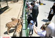 باغ وحش مشهد هنوز با استانداردهای مطلوب فاصله دارد