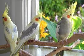 پرنده بسيار زيبا