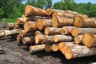 کشف چوب قاچاق