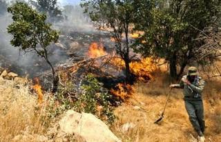 مهار آتش سوزی در جنگل های معمولان