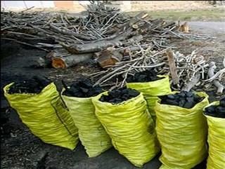 ۲۴۰کیلو گرم زغال غیر مجاز بلوط در شهرستان پلدختر کشف شد