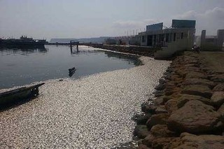 مرگ ماهی ها در ساحل