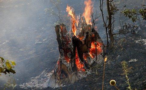 جنگل هایی که به سیخ می کشیم/ مرگ درختان هیرکانی مانه و سملقان در آتش بی توجهی