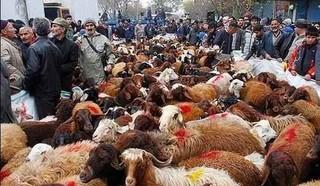 ذبح دام در حسینیه اعظم زنجان