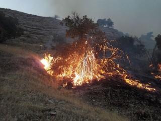آتش سوزی عرصه های جنگلی ایلام