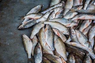 ماهی غیر بهداشتی