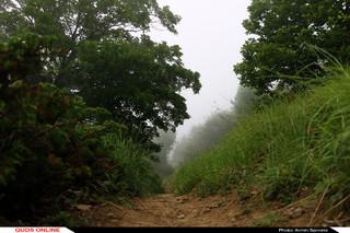 جنگلی سوار بر گهواره ابر