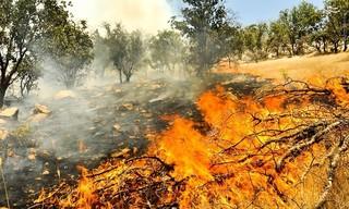 کهگیلویه و بویراحمد - آتش سوزی کوه خامی
