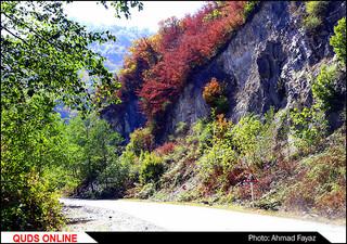 پاییز زیبای جنگل توسکستان استان گلستان- گزارش تصویری
