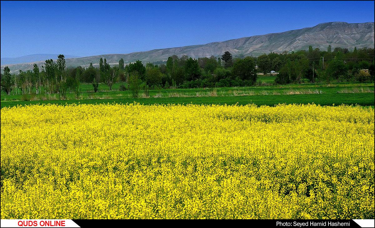 کشاورزی /گزارش تصویری