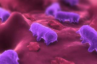 باکتری تراریخته