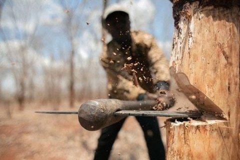 متخلف قطع درختان جنگلی
