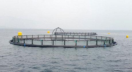 ذخیره سازی ماهی