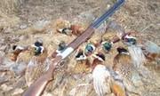 پنج شکارچی متخلف در تایباد دستگیر شدند