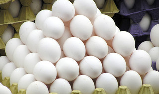 توزیع تخم مرغ