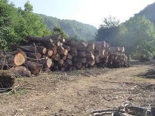 قطع درختان جنگلی