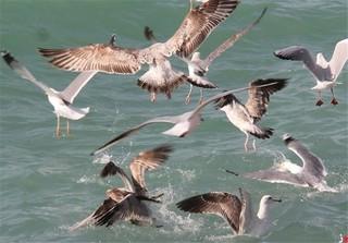 پرنده های مهاجر