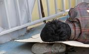 فیلم/کارتنخوابی بالای پل هوایی میدان جانباز مشهد