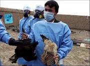 هشدار اداره حفاظت محیط زیست تهران درباره آنفلوانزای پرندگان+فیلم