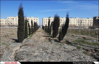 کاشت درخت به مناسبت روز درختکاری