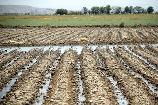 مصرف کشاورزی