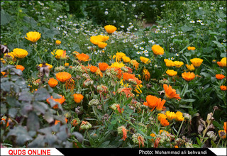 طبیعتی بکر و زیبا در استان خوزستان