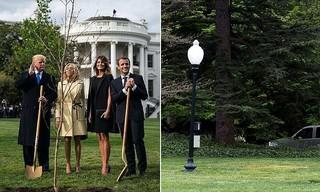 قرص نهال در کاخ سفید