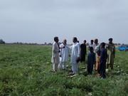 محصول روی زمین مانده و چک های برگشتی تنها دسترنج کشاورزان/ حمایت دولت تنها خواسته کشاورزان بوئینگ