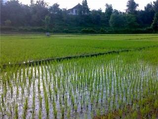 محدودیت کشت گیاهان آب بر