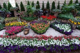 نمایشگاه گل ساوه