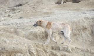 سگهای ولگرد در مهرشهر زاهدان