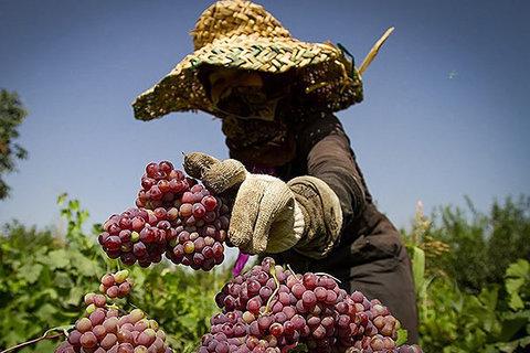 پرداخت تسهیلات توسعه اشتغال روستایی و عشایری در خراسان رضوی