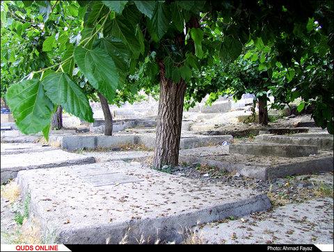 رد پای وقف و خیر درختان توت در قبرستان ها- گزارش تصویری