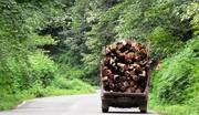 دستگیری ۳۰ قاچاقچی چوب در شهرستان قائمشهر