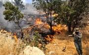 جنگلهای بوشهر از کمبود امکانات میسوزد/مقابله با دستان خالی