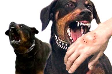 بیماری مشترک میان انسان و حیوان