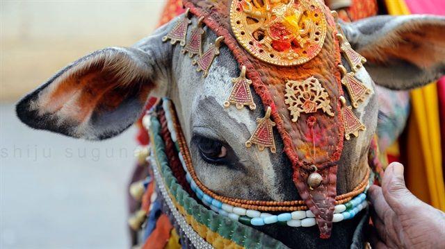 قتل یک مرد مسلمان به دست هندوهای گاوپرست