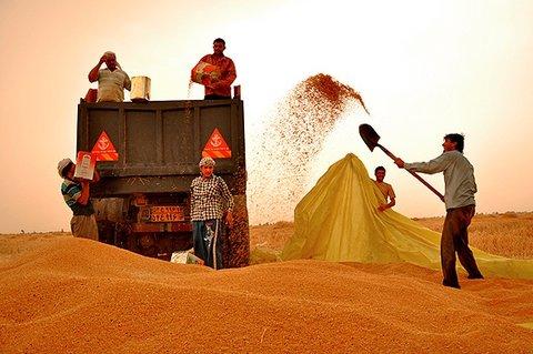 خرید محصول کشاورزان