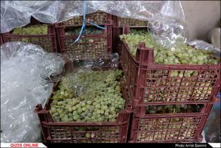 کشف کارگاه مشکوک به تولید مشروبات الکلی در حاشیه شهر مشهد