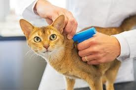 نصب میکروچیپ روی حیوانات