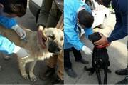 مرحله نخست رهاسازی سگهای بلاصاحب در طالقان اجرا شد