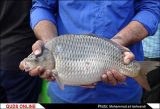 پروژه پرورش ماهی و میگو با زهاب نیشکر